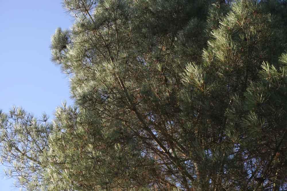 soleil pins bretagne vacance clip