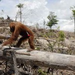 ouragan huile palme nutella danger déforestation