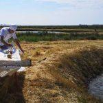 les marais salants du sud de la France et les marées de culture d'huitres vers Oléron